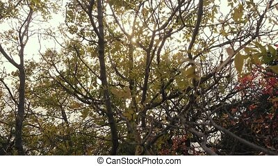 Bright sun through the branches of a tree