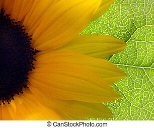Bright Sunflower