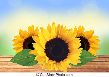 Bright Sunflowers on wooden table over nature background