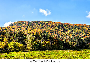 Bright sunny autumn in the mountain