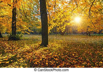 Bright tree in sunny autumn park
