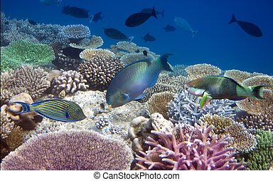 bright tropical fish over a coral reef