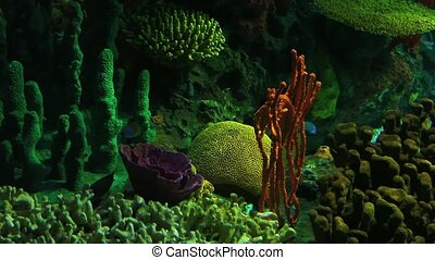 Bright Tropical Fish swim in colorful coral growths.