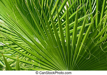 Bright tropical green palm leaves, background nature