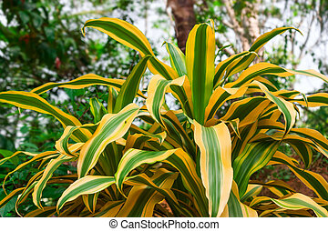Bright tropical plant.