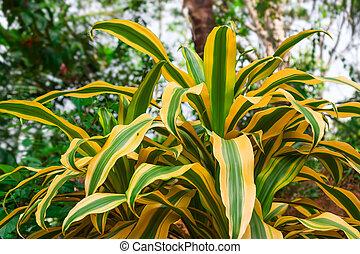 Bright tropical plant.