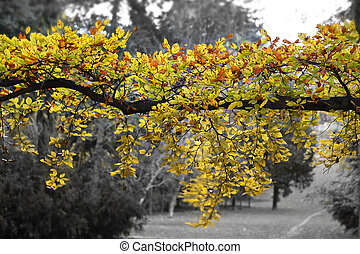 Bright yellow branch of autumn tree