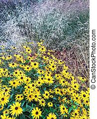 Bright yellow daises in a summer garden