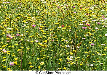 Bright yellow daisies background