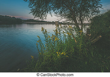 bright yellow flowers in sunset scenery in the pond