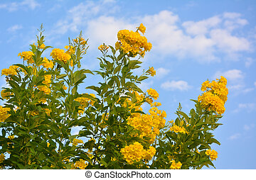 Bright yellow flowers with blue sky