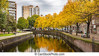 Bright yellow gold foliage maple trees, reflections in the river canal water, Rotterdam, Netherlands in a cloudy autumn day