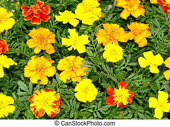 Bright Yellow Red and Orange Flora Picture