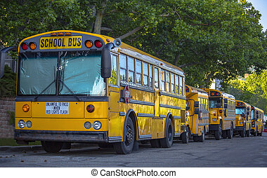 Bright yellow school buses parked on the road