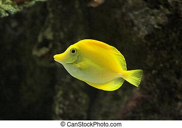 Fish - Bright Yellow Tropical Fish