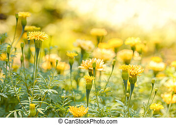 Bright yellow wild flowers under the midday sun with a bokeh