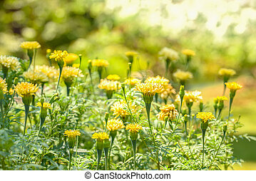 Bright yellow wild flowers under the midday sun