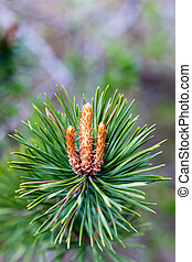 Brightly green prickly branche of fur-tree or pine