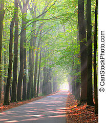 forest lane is brightly lit by sun rays