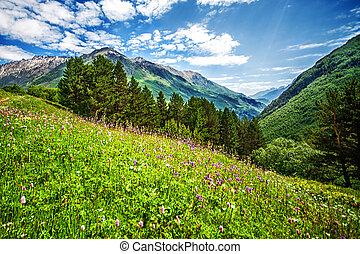 brilhante côr-de-rosa, flores, ligado, um, montanhas, campo