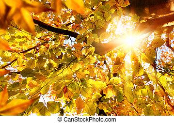 brilhar sol, através, dourado, folhas