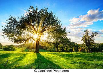 brilhar sol, através, um, árvore, em, paisagem rural