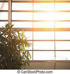 brilhar sol, através, um, grande, prato, janela vidro