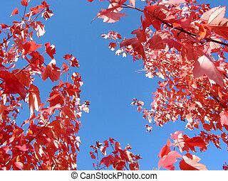 brillante azul, otoño, cielo, y, ramas de árbol
