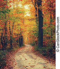 brillante, bosque, otoño