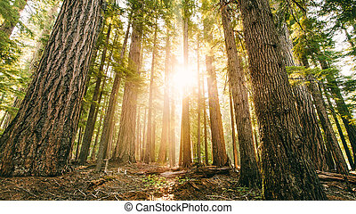 brillante, bosque