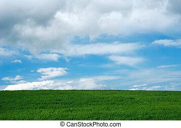 brillante, campo verde