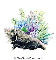 brillante, coraza marítima, dibujado, succulents, goliath, acuarela, mano