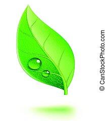 brillante, hoja verde