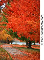 brillante rojo, árboles de otoño