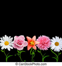 brillante, vector, -, flores, fila