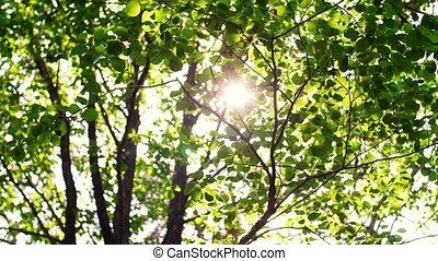briller, feuilles, branches, par, arbre, soleil