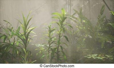 briller, rivière, arbres, exotique, par, brouillard, soleil