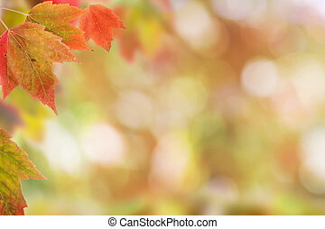 Brilliant Red Maple Leaves on Blurred Background