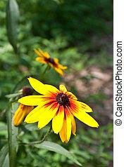 Brilliant Sunflower in Forest