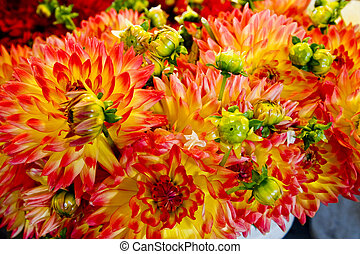 Brilliant Yellow and Red Flowers