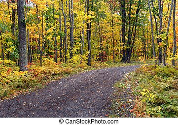 Brilliant yellow leaves cover hardwoods on a back road in Upper Peninsula, Michigan.