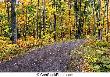 Brilliant Yellow - Brilliant yellow leaves cover hardwoods...