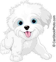 brincalhão, lap-dog