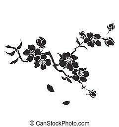 brindille, fleurs cerise