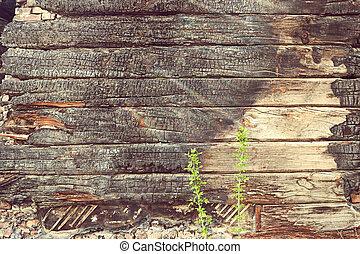 brindilles, vieux, bois, après, text., jeune, carbonisé, endroit feu, fond, croissant, vert, planches, tewo