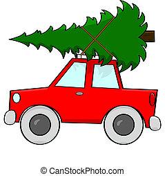 Bringing a tree home