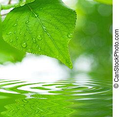 brink loof, weerspiegelen, in het water, ondiepe focus