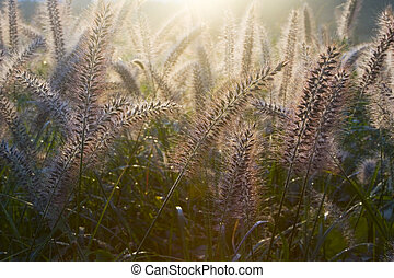Bristle Grass III