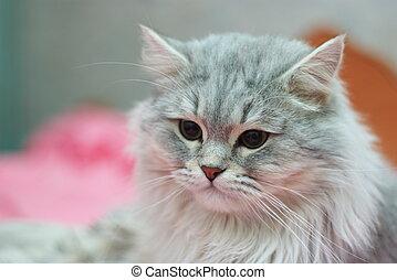 Britain cat