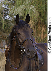 Brite horse